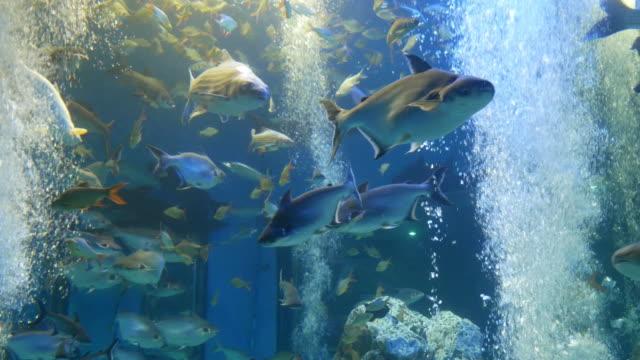 淡水魚の博物館には、水族館の魚の様々 ながあります。 - 水族館点の映像素材/bロール