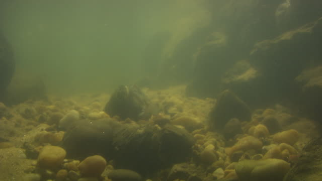 a freshwater mussel exposes its fish-like mantle as a lure. - ムール貝点の映像素材/bロール