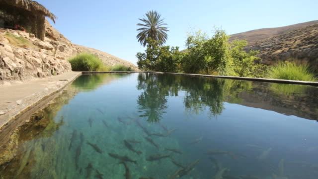 Freshwater pool, En Prat Nature reserve, Wadi Qelt, running west to east across the Judaean Desert in the West Bank/ Steady Cam Shot
