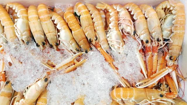 freshwater prawns on fish market display - prawn stock videos & royalty-free footage