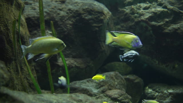 freshwater sea life in tank - sea bass stock videos & royalty-free footage