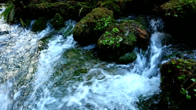 freshwater spring flowing water - freshwater stock videos & royalty-free footage