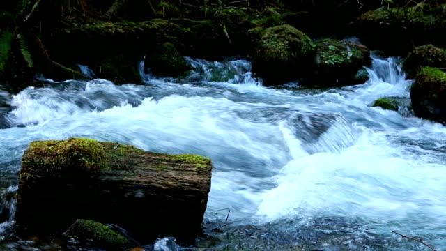 vídeos de stock, filmes e b-roll de primavera de água doce fluindo água - água doce