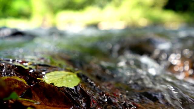 淡水春 - 小川点の映像素材/bロール