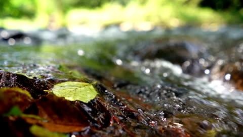 süßwasserquelle - moos stock-videos und b-roll-filmmaterial