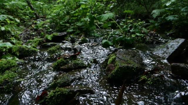 vídeos y material grabado en eventos de stock de corriente de agua dulce - reserva natural de khingan - flowing water