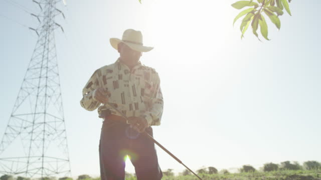 fresno, california - etnia latino americana video stock e b–roll