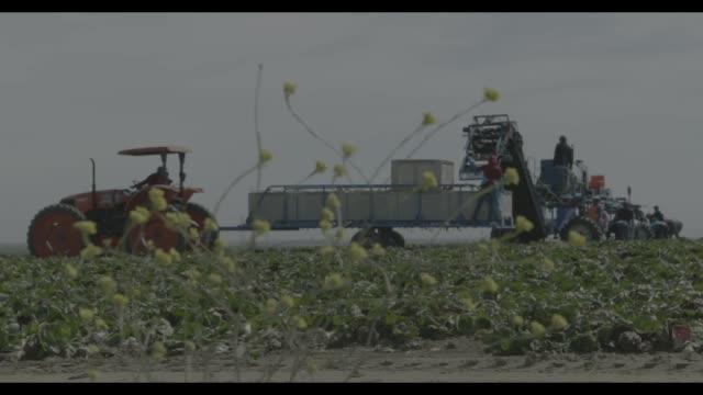 fresno farming - フレスノfresno点の映像素材/bロール