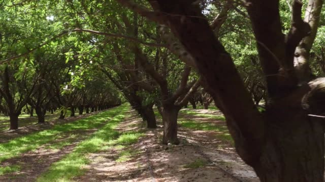 fresno farming - orchard stock videos and b-roll footage