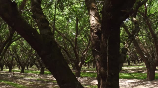 fresno farming - california stock videos & royalty-free footage