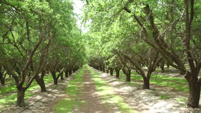 fresno farming - orchard stock videos & royalty-free footage