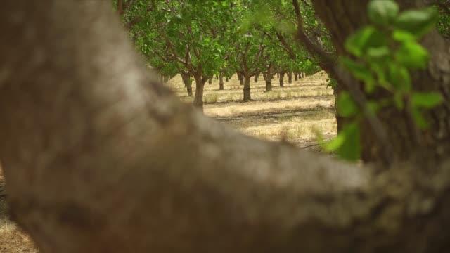 Fresno Farming