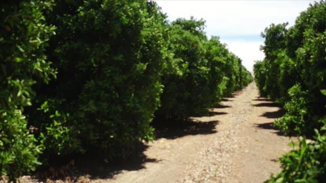 stockvideo's en b-roll-footage met fresno farming - fruitboom