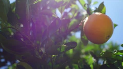 fresno farming - orange stock videos & royalty-free footage