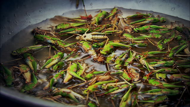 fried grasshoppers at food stall, thailand - insect stock videos & royalty-free footage