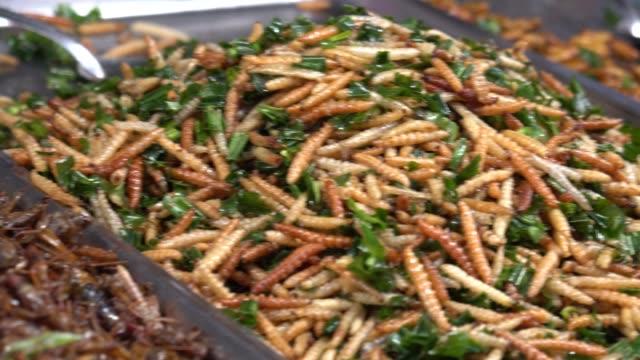 gebratene insekten, thailändische streetfood. - insekt stock-videos und b-roll-filmmaterial
