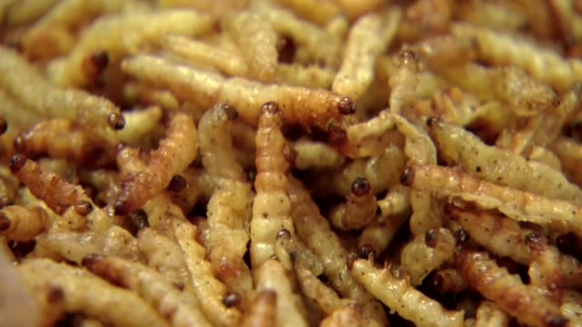 fried mealworm maggots - insect stock videos & royalty-free footage