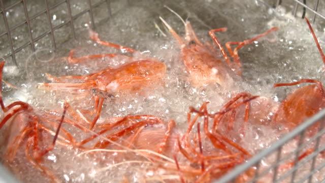 vídeos de stock, filmes e b-roll de fried southern rough shrimp in oil - crocante