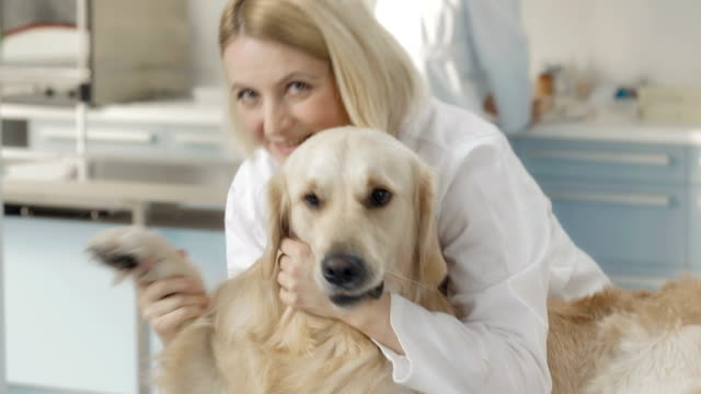 friendly veterinarian hugging a dog - examination table stock videos & royalty-free footage