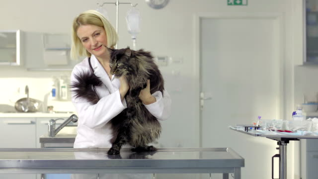 friendly veterinarian stroking a cat - examination table stock videos & royalty-free footage