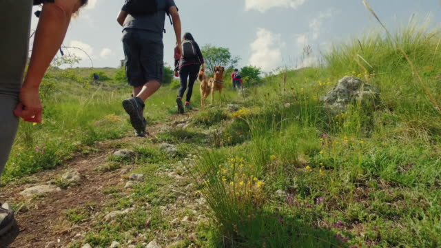friends and dog hiking in italian apennines mountains - natural parkland stock videos & royalty-free footage