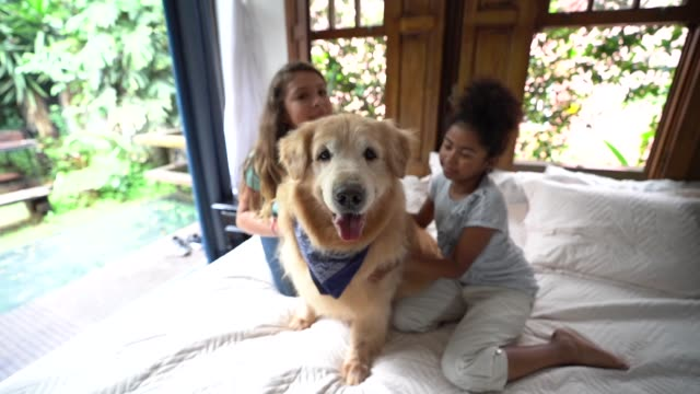 freunde spielen mit dem hund im bett - 12 13 jahre stock-videos und b-roll-filmmaterial