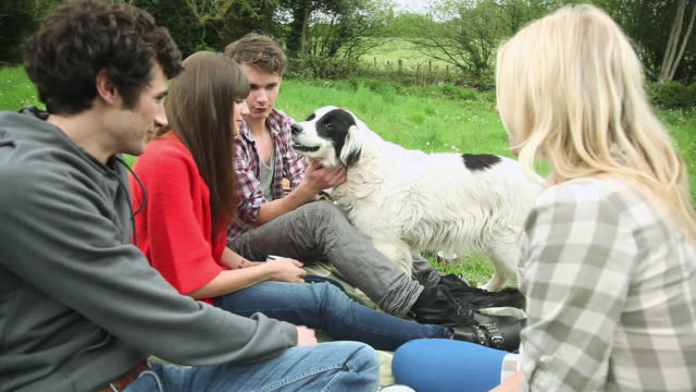 friends sitting in a field and petting dog - guildford stock videos & royalty-free footage