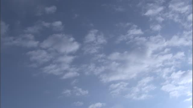 Frigate birds soar in a cloudy blue sky. Available in HD.
