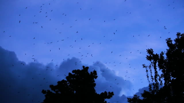 Frigatebirds flying over treetops and static cloud clusters, wide