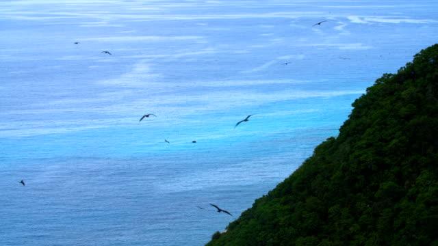 Frigate-birds in the Seychelles