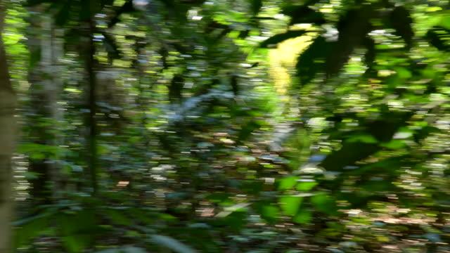 vídeos y material grabado en eventos de stock de persona asustada corriendo en el bosque, escena pov - maldad