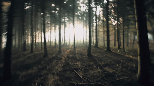 pov frightened person running in the forest - woodland stock videos & royalty-free footage
