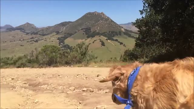 fritz the dog has become pretty famous on https://www.youtube.com/watch?v=b_tsl8irmts youtube for his food-catching antics, because, well, he's not... - https stock videos & royalty-free footage