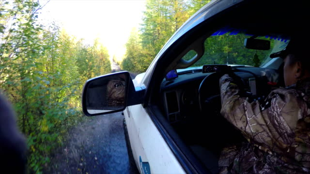 stockvideo's en b-roll-footage met pov off-road 4x4 car driving on road,russia. - twijg
