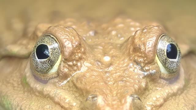 frog eye - swamp stock videos & royalty-free footage