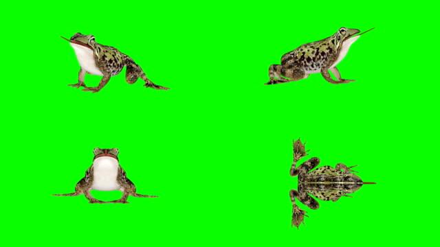 vídeos y material grabado en eventos de stock de pantalla verde rana (loopable) - rana
