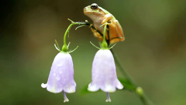 frog hanging on - plusphoto stock videos & royalty-free footage