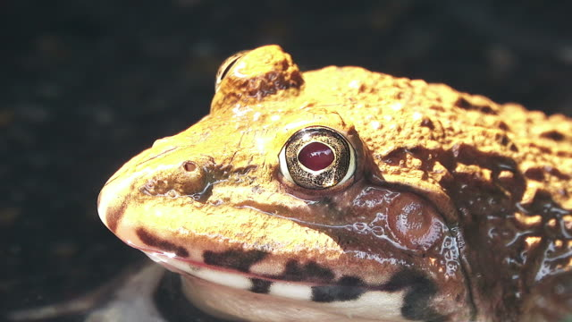 frog head - animal eye stock videos & royalty-free footage