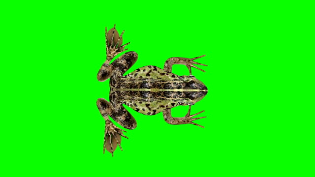 frog idle green screen (loopable) - green matte stock videos & royalty-free footage