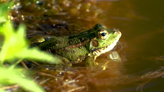 frog lake - standing water stock videos & royalty-free footage