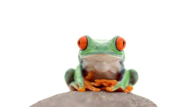 frog on a rock - frog stock videos and b-roll footage