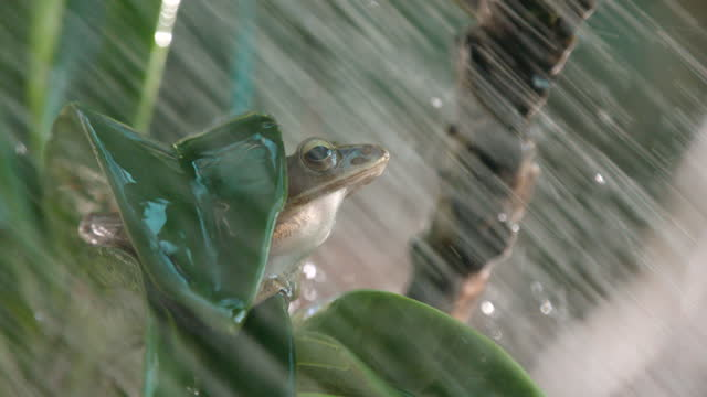 vídeos de stock e filmes b-roll de frog on orchid with shower slow motion - animals in the wild