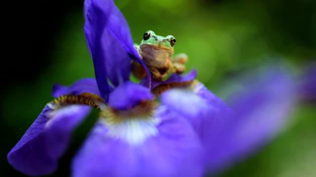 vídeos y material grabado en eventos de stock de rana en la flor - rana