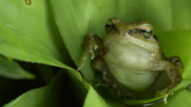Frog sits in pool of water held in bromeliad.