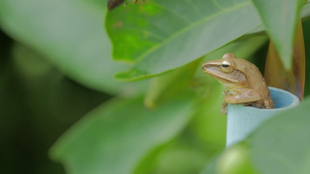 frog - heliconia stock videos & royalty-free footage