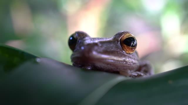 vídeos y material grabado en eventos de stock de rana - ojo de animal