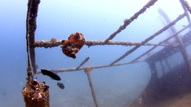 frogfish - north pacific stock videos & royalty-free footage