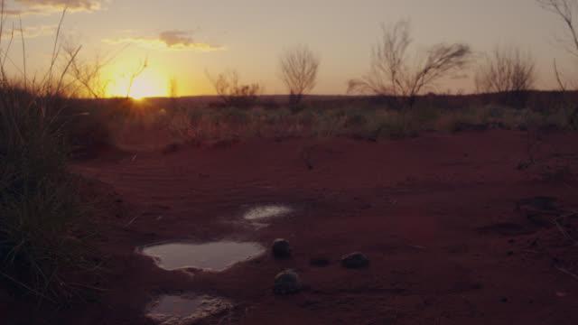 frogs in dry stream bed, australia. - kleine gruppe von tieren stock-videos und b-roll-filmmaterial