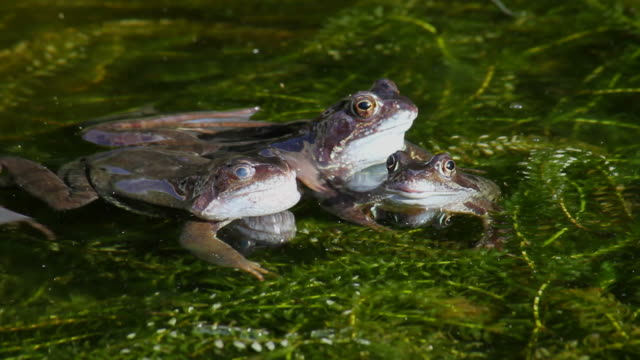 frogs - pond stock videos and b-roll footage