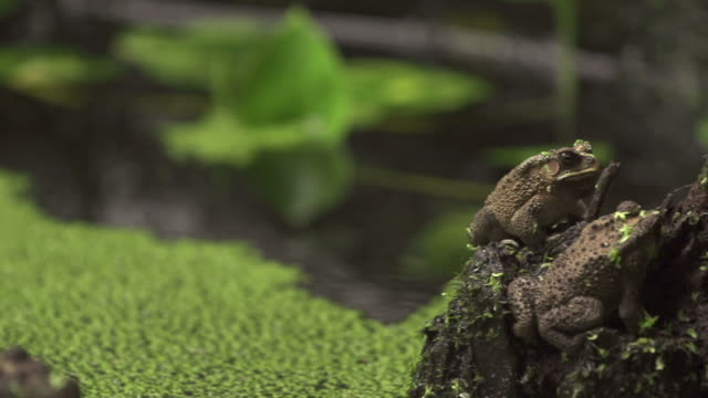 frogs - marsh stock videos & royalty-free footage